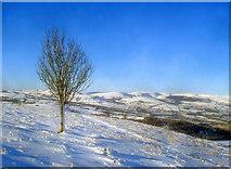 SO2456 : Lone tree on Hergest Ridge by Trevor Rickard