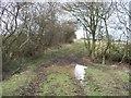 SP3432 : Muddy bridleway by Michael Dibb