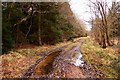 SP6211 : Waterlogged track in Shabbington Wood by Steve Daniels