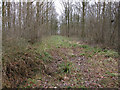 TL6656 : Ride through Ditton Park Wood by Hugh Venables