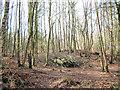 SJ5471 : Log-pile in Birch wood by Jonathan Kington