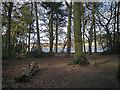 SP0995 : Woodland beside Longmoor Pool by Row17
