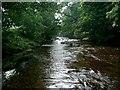 SE1286 : River Cover by David Greer