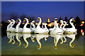 J5082 : The 'Pickie Swans' at dusk : Week 12