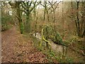 SX4861 : Path and stream, Porsham Wood by Derek Harper
