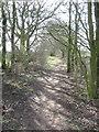 SJ6171 : Hunt's Lane heading West to Sandiway by Dr Duncan Pepper