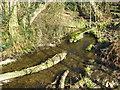 SJ6269 : Downstream by Dr Duncan Pepper
