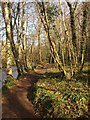 SX7988 : Path by the Teign : Week 12