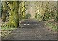 SJ9283 : Lady's Incline by Alan Murray-Rust