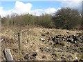 NS7760 : Woodland off the Edinburgh Road by Richard Webb