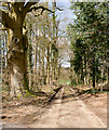 SU5820 : Drive to North Lodge, Hazel Holt : Week 14