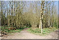 TQ7636 : High Weald Landscape Trail, Angley Wood by Nigel Chadwick