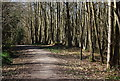 TQ7636 : High Weald Landscape Trail, Angley Wood (3) by Nigel Chadwick
