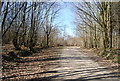 TQ7536 : High Weald Landscape Trail, Angley Wood by N Chadwick