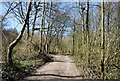 TQ7536 : High Weald Landscape Trail near the edge of Angley Wood by Nigel Chadwick