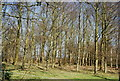 TQ7436 : Woodland by the High Weald Landscape Trail by N Chadwick