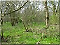 TL0360 : Galsey Wood Nature Reserve by M J Richardson