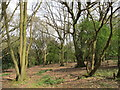 "SP9709 : Woodland ""The Beeches"", Berkhamsted by David Hawgood"