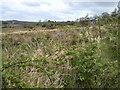 R2273 : Landscape, Balleen, Co Clare by C O'Flanagan