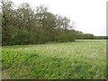 TL6556 : Basefield Wood by Hugh Venables