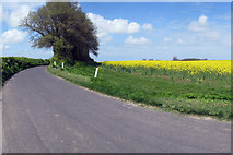 TR2168 : Oilseed Rape Field by Oast House Archive