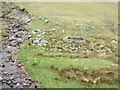L9069 : River Glenlaur on the eastern slope of the Sheeffry Hills, with small stone sheep-pen by Keith Salvesen