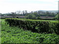 TQ4708 : Hedge with Mount Caburn in the background, Firle, East Sussex by nick macneill