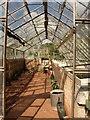 SX8863 : Greenhouse, Cockington : Week 19