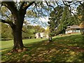SX8963 : Cockington Park : Week 19