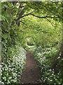 SW9058 : Bridleway near Fraddon by Derek Harper