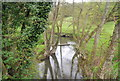TQ2029 : The River Arun, Golding's Bridge by N Chadwick