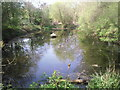 TQ4577 : The Slade pond, Plumstead Common by Marathon