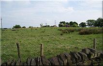 SD7612 : A field with not much in it by Bill Boaden
