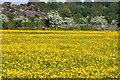 SP4909 : Buttercup covered Wolvercote Common by Steve Daniels
