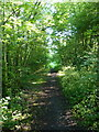 SJ8901 : The former railway trackbed at Aldersley by Richard Law