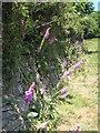 SW8338 : A Cornish hedge at Pill Farm by Rod Allday