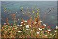 SZ0378 : Cliff-top flowers : Week 26