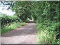 SJ4466 : Fir Tree Lane by David Quinn
