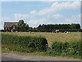 SJ7366 : Cows in a field off Brereton Lane by Stephen Craven