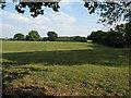 SJ7368 : Field near Byley Lane by Stephen Craven