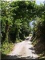 SW8561 : Lane at Trewassick by Derek Harper