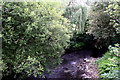 SJ9799 : River Tame:  Downstream from Grove Road Bridge by Dr Neil Clifton