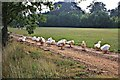 TL0232 : Flock of Geese, near Westoning by Paul Buckingham