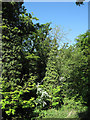 TL5652 : Trees along Fleam Dyke by Hugh Venables