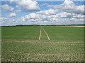 TL6574 : Track through the crop by Hugh Venables