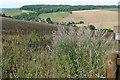 SU8889 : Above Sheepridge valley by Graham Horn