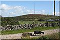 SX2770 : Linkinhorne: Caradon Hill television mast by Martin Bodman