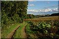 SE3127 : Bridleway and Rhubarb : Week 36