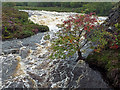 NG3951 : Treaslane River : Week 37
