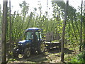 TQ8029 : Hop Picking by Oast House Archive